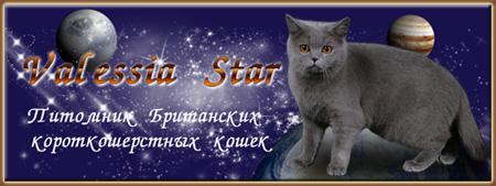 Valessia Star - Питомник британских кошек